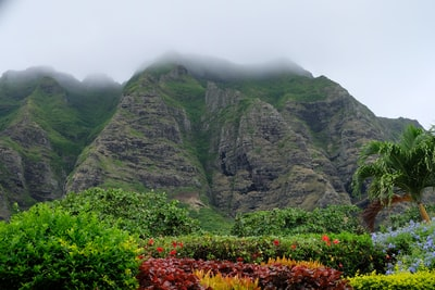 How to take a photo of a Hawaii safe-travel certificate in an airport